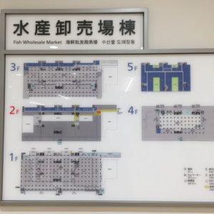 豊洲市場 水産卸売市場棟 見学コース