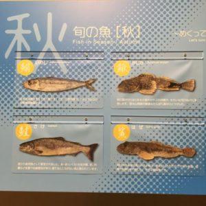 豊洲市場 水産仲卸売場棟 秋の魚